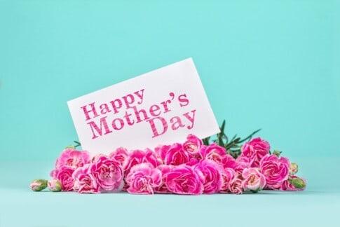 母の日のコンセプトでピンクのカーネーション